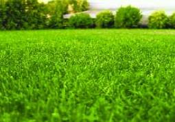 Stadio - erba campo da calcio